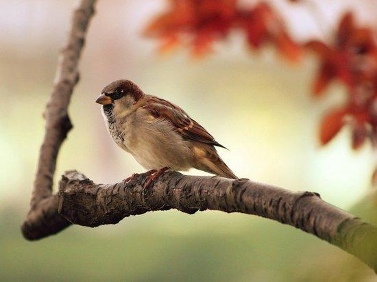 Специалисты объяснили причину массовой смерти птиц в Красноярске