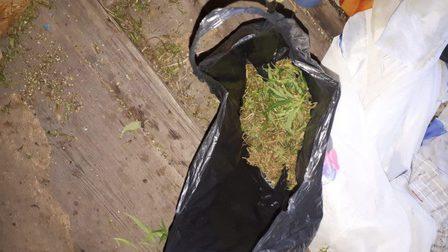 У жителя Красноярского края нашли почти килограмм марихуаны