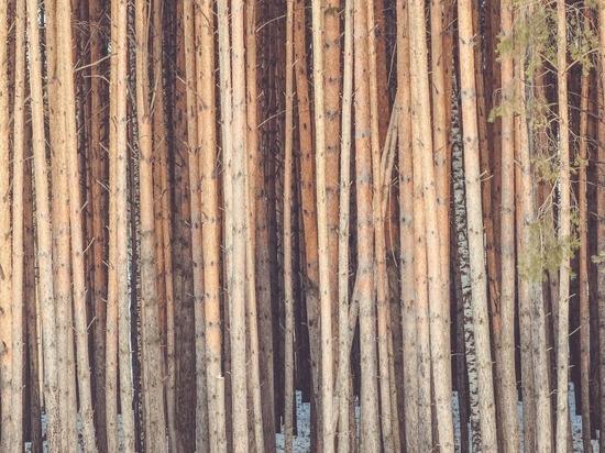 Красноярцы предстанут перед судом за незаконную вырубку леса на 70 миллионов рублей