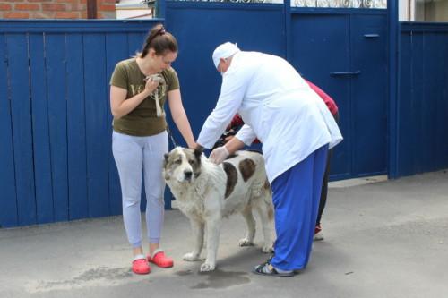 С 5 по 29 октября 2021 домашних животных можно бесплатно привить от бешенства в Ростове-на-Дону